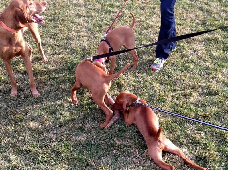 puppy playdate