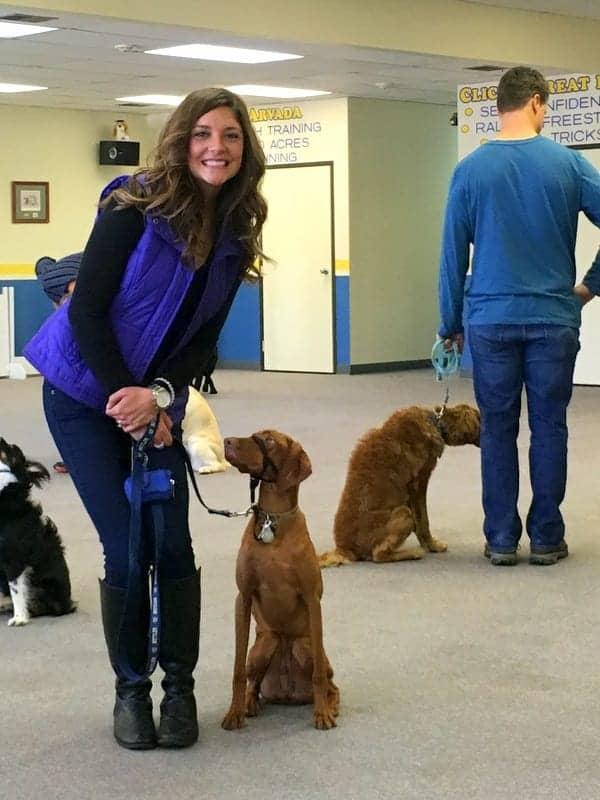 Puppy School Ted Terroux Dog Training