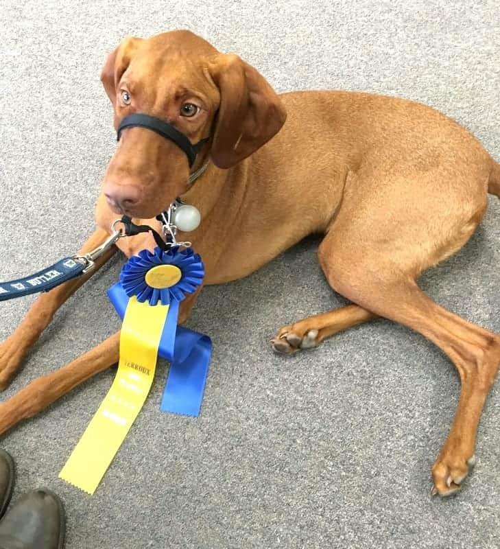 Ted Terroux Dog Training