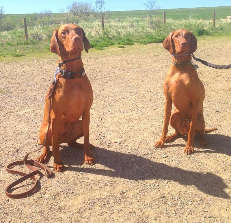 Bernie and Astro Chatfield Dog Park