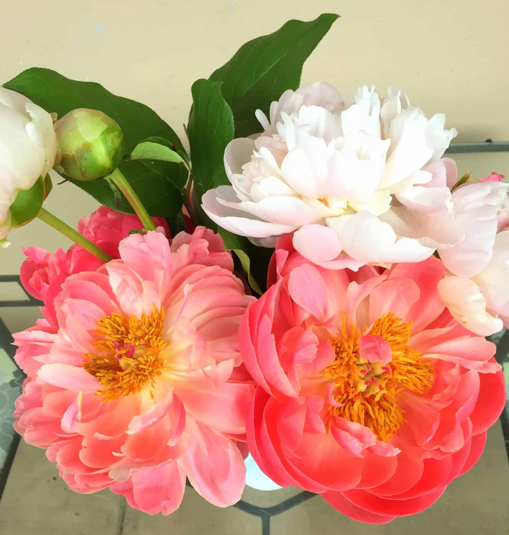Peony from Treble in the Kitchen